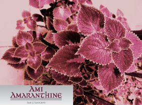 Amaranthine leaves sideways